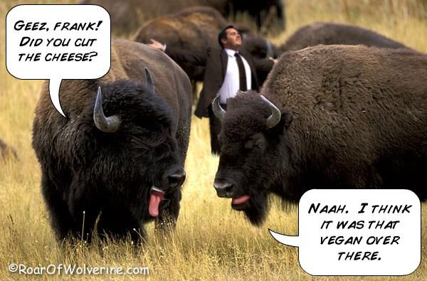 Do cows produce more methane than buffalo?